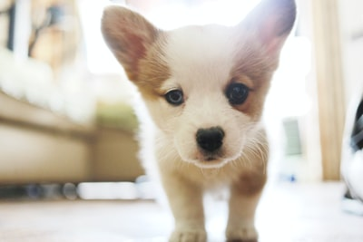 Why puppies need to be tracked, monitored and tracked back